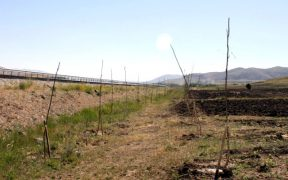 Turkey planted a world record 11 million trees in November. Ninety per cent of them may already be dead 25