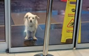 Loyal dog waits for six days outside Turkey hospital for her sick owner 25