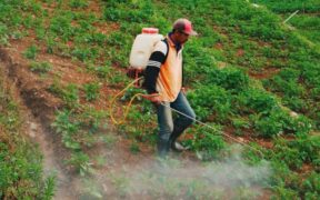 Growing number of farm laborers in Turkey are victims of occupational accidents 22