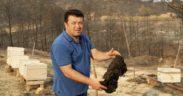 Devastated by wildfires, Turkey's beekeepers see grim future 22