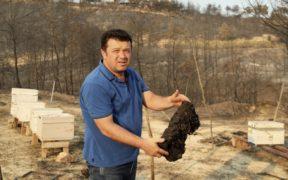 Devastated by wildfires, Turkey's beekeepers see grim future 24